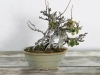 Bonsai im Winter